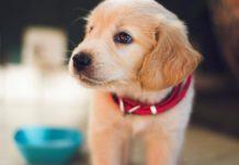 Náklady na pořízení psa